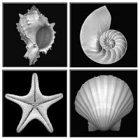 Shell diversity